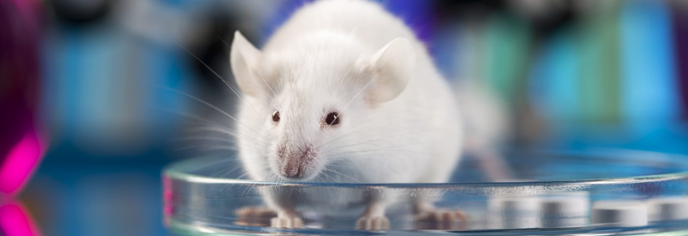 CRISPR-Cas9 in Lipid Nanoparticles Found to Safely Treat Ovarian Cancer in Mice